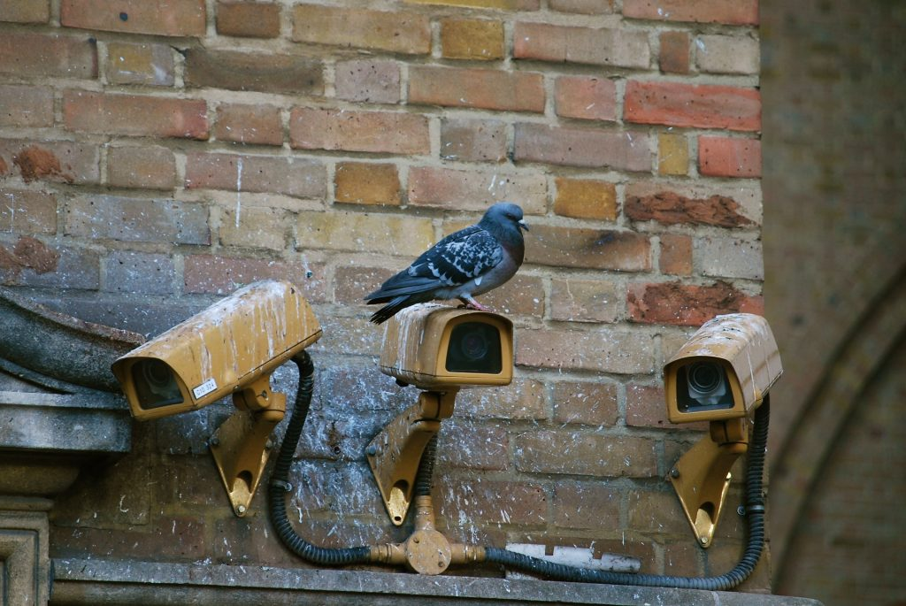Pigeon fouling on camera