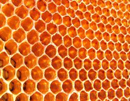 Swift Pest Solutions Bee Comb
