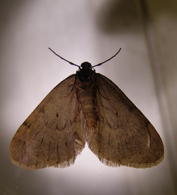 Swift Pest Solutions Clothes Moth